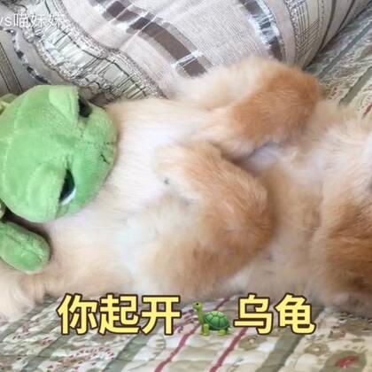 你以为仔仔在拜托拜托吗🌞其实就是睡着了而已😂仔仔最近身体不错👍🏻铲屎婆的神来之笔🌚乌龟马赛克#宠物##坚强的仔仔##宠物奇葩睡姿#