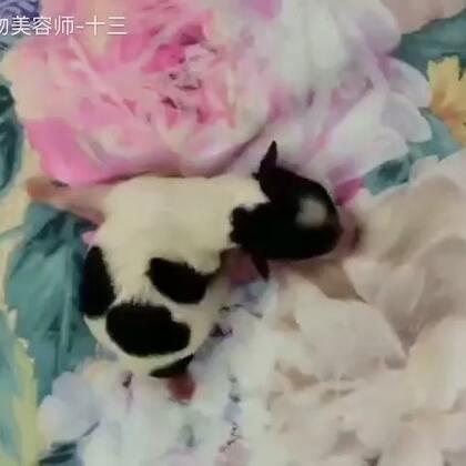 可爱的小小花#萌宠乐园#http://www.banpupet.com/