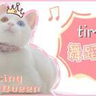 timi:喵界舞王了解一下~#宠物##timi#
