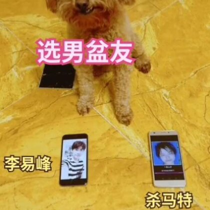 Jerry太懂我的心了🤔#宠物##精选##汪星人#