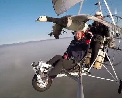 【伴你高飞!法国男子驾驶超轻型飞机带领鸟类迁徙】克里斯蒂安·穆莱克是一位58岁的法国气象学家。十几年前,他收养了一群鸟类。每年到鸟类迁徙的时候,穆莱克就驾驶超轻型飞机,帮助它们找到合适栖息的环境,带领鸟儿们飞往正确安全的方向。网友:第一次以这样的视角看见鸟飞行!👍👍#伴你高飞#
