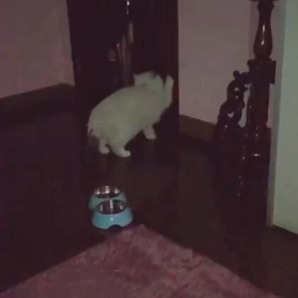 這樣是出不去的 😂😂😂😂#宠物##多多##加菲猫#