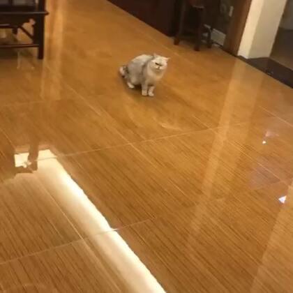 #宠物#听到要生二胎秒怂的Miumiu哈哈哈哈