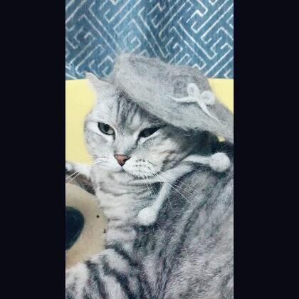 用撸下来的猫毛给猫小主做个帽子和小围脖!#宠物##羊毛毡手作#