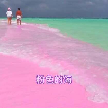大海,爱她就带她去看看粉色的海吧!太美了@美拍小助手 #精选##精选#