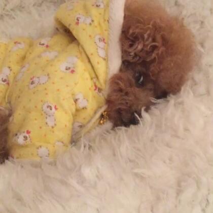#宠物#-💖公主-甜心💖-公主:好冷😂,猫窝窝啦😴,麻咪勿扰哦🙅🏻♀️(哈哈,小丫头👸🏼,一脸不耐烦了😅)#宠物奇葩睡姿##小年快乐#