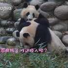 #也就才看二十遍##萌团子陪你过周末#这熊孩子是有多烦人啊!!!