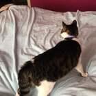 #精选##宠物#大床是我哒!你们谁敢上来,试试!🤬……弄死你们一个是一个……