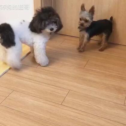 正确狗狗社交过程