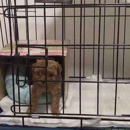30天的小狗都知道不在自己窝里拉,你家狗为什么会在家里拉,有没有思考过…