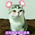 #魔性抖眉舞#哈哈,好不容易识别到猫咪脸😂,包哥今天萌翻啦!😄😜#来晒小萌爪##宠物#