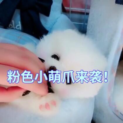 #来晒小萌爪#就是这么可爱 没谁了 喜欢不喜欢 点赞的宝宝们 春节期间下单狗狗 都打九折❗#宝宝#九折❗#宠物#@美拍小助手 @美拍娱乐