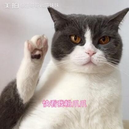 传说 脚底有印记的猫🐱是在黑不见光的漫漫长路上 孤独的走过上辈子来找未来的铲屎官😊好吧 这是我编的😂你们看爪爪就好了🤓#宠物##喵老板##来晒小萌爪#