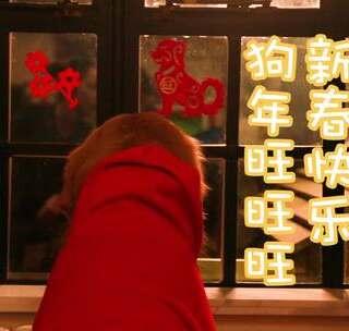 #吉祥年菜# 超萌狗狗自制年夜饭,给您拜年啦祝您狗年旺旺旺! #萌宠##情人节#