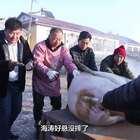 东北大哥杀300多斤肥猪宴请全村人,边吃边跳超热闹,年味十足#二更视频##美食##我要上热门#