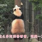 #萌团子日常#囡囡同学有着特殊的上树方式~