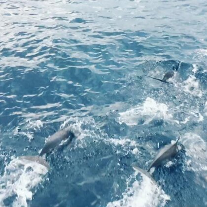 凌晨4点从拉克代夫海追到印度洋只为看大蓝鲸🐟 没想到 出海🌊遇到了成百上千的海豚真的意外的惊喜 看到我们就激动的给我们表演 简直感动到飙泪 所以请忽略我们压抑不住激动的心情的声音#大海#