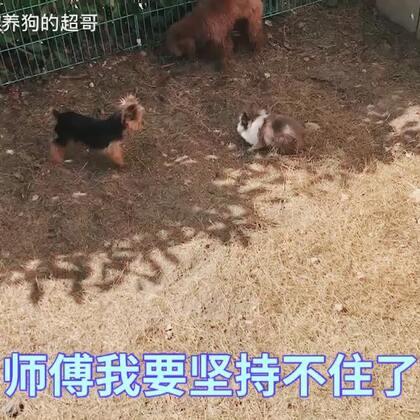 兔子的师傅居然是小不点