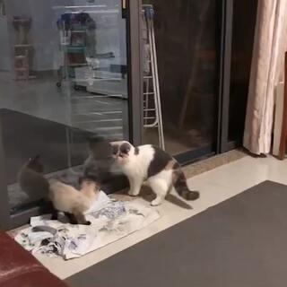 琉稣的美拍:两只猫的饭后运动减肥夹和脸瘦脸减肥图片