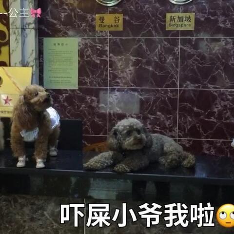 【🎀心语--公主🎀美拍】#宠物#-💖公主-甜心💖-QQ:美女们...