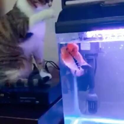 猫被鱼打了!😂