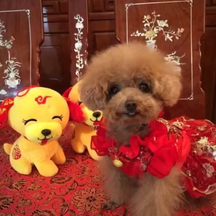 #宠物#-🏮公主-甜心🏮-公主:嘻嘻,👸🏼㊗️2018🐶年😜美拍的叔叔姨姨、哥哥姐姐们😘,新年里身体健健康康❤️,㊗️生意旺、工作旺、学习旺,众旺所归👍🏻,㊗️朋友们家庭幸福,心想事成,🐶年大吉🙏🏻#2018春节快乐##大年三十#