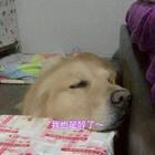 这呼噜声太大了~#宠物##搞笑#