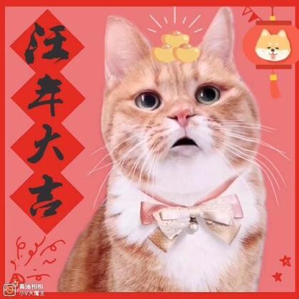 ⁽⁽◝( ˙ ꒳ ˙ )◜⁾⁾ 愿你在新的一年诸事顺利,幸福安康~旺上加旺! 最近肤质太差,就让我的艾露猫给各位送祝福吧! 么么哒比心心(๑˙❥˙๑)#宠物##新年快乐##喵星人#@美拍小助手