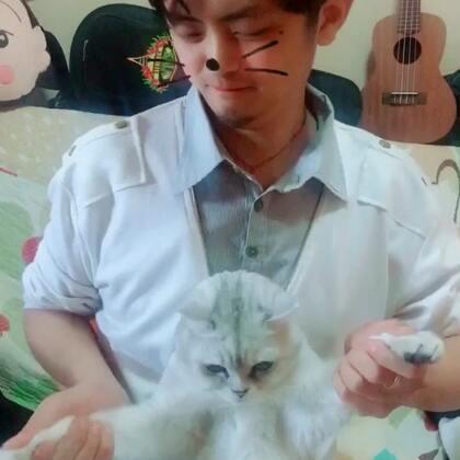 #海草舞# 猫一脸懵懵