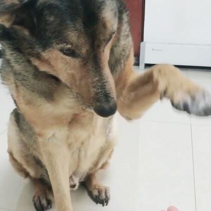 握手握手!#宠物#