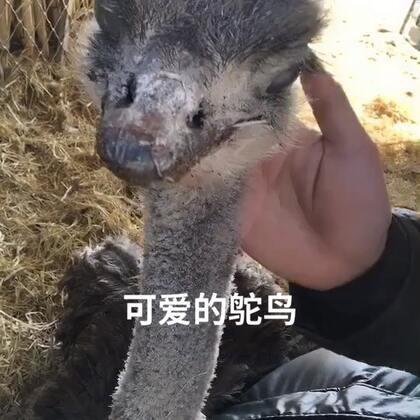 #宠物##精选#@美拍小助手 @主持人王威子