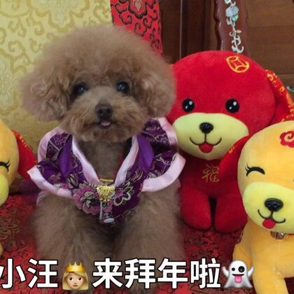 #宠物#-🏮公主-甜心🏮-公主:万象更新🐶儿喜,喜气盈门🐶儿乐,平安🐶儿乐淘淘,福禄寿泰财🐶儿报春来。公主👸🏼给您拜年送吉兆啦👻👻❤️❤️#大年初一##美拍拜年#