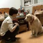 狗:爱我你别打我😒#宠物##搞笑#
