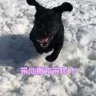 #宠物#伴随着新疆舞曲,狗年一起来撒欢