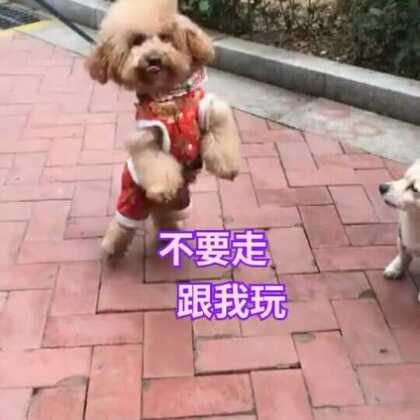 😂😂舅舅和外婆溜涂涂,遇到小花了#宠物##精选##汪星人#