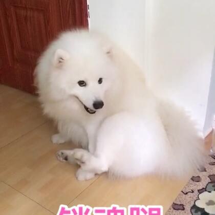 啊呀!老久不更新了!😋#宠物##精选#