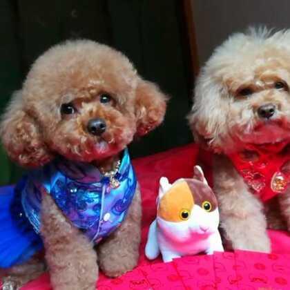 #大年初三#今天外面下雨🌧不能出去玩👼娘俩的表情好无奈啊😞😞小魔豆都想哭了😁😁#宠物##小魔豆一家#