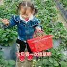 ☀18~23°💕今天带宝贝摘草莓🍓开始和爸爸配合的很好👍宝贝拿着草莓爸爸剪✂然后和妈妈配合手把手一起剪下草莓👏最后宝贝尝试自己剪也成功了✌自己摘的草莓特别甜宝贝吃了十几个😘#舞福开运舞##萌宝新衣秀##宝宝#21+31