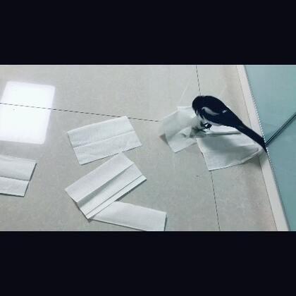 撕纸最拿手了