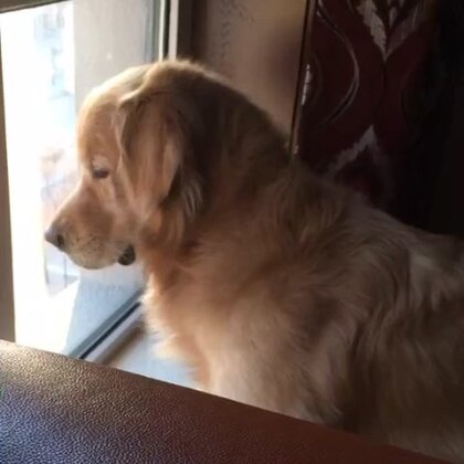 #宠物#楼下有狗狗、看入迷了都😂