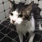 #萌宠洗澡记#这个话题怎么可以没有蒙莎肉呢?都是乖宝宝~#宠物#