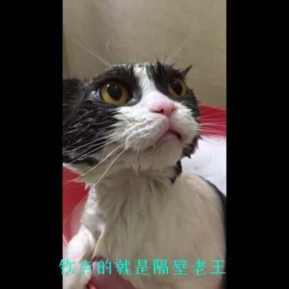 喵妹沐浴🛀之爆笑文字版!😂😂#宠物##萌宠洗澡记##喵妹嘻哈剧#