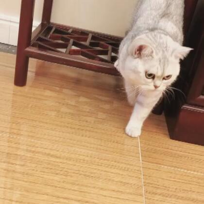 #宠物#想我们Miumiu没~