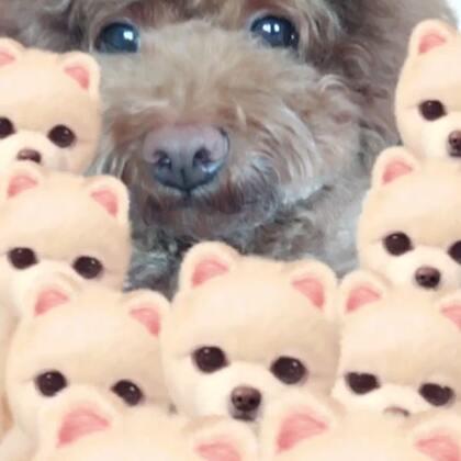#狗年暖暖舞##精选##宠物#