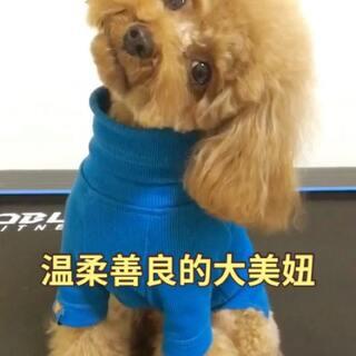 #宠物##狗狗##泰迪# 看了不给小❤️❤️的叔叔阿姨都是大坏蛋😄