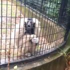 这猴子会口技啊!😂😂😂#精选##搞笑##动物#