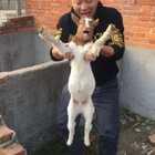 羊: 妈呀~ 我恐高!