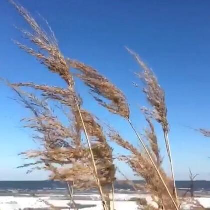 #秦皇岛海边##冬天的海边#人生不过是一场旅行,你路过我,我路过你,然后各自向前,各自修行…真是疾风知劲草,智者必怀仁
