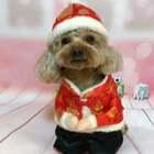 正月初七陆续的假期结束,mina小汪和麻麻㊗️美拍的朋友们,开门大吉,生意兴隆旺旺哒!#萌宠拜年秀##宠物#