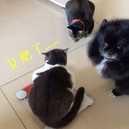 兄妹三人的逗比对话😂每逢佳节胖十斤~四不四很符合此刻的你们呢! 哈哈😂😂(妹纸的体重纯属虚构^只有3·9公斤哦)#宠物##精选##俩喵欢乐多#